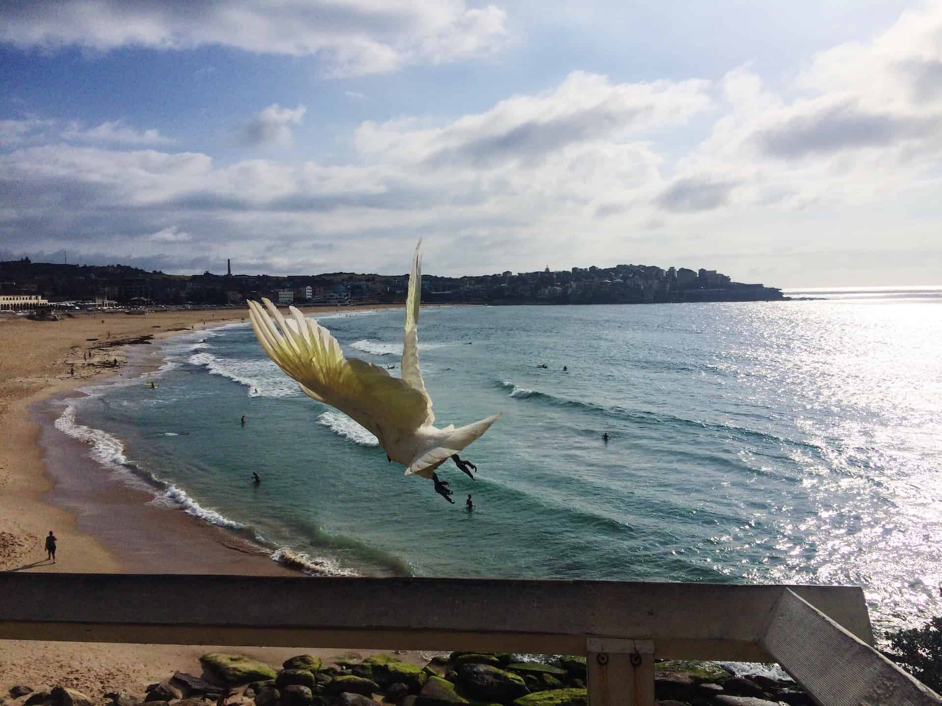 Bondi Beach Facts You Probably Didn't Know